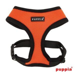 orange hundesele