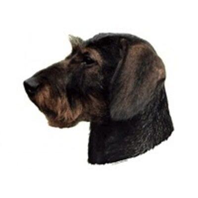 dekal gravhund ruhåret