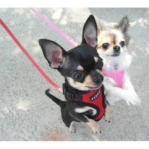 billigste hundesele tildinhund