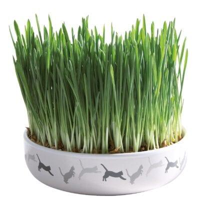 Vitaminrig græs til kat